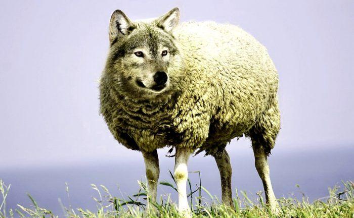 fabula pedro y el lobo